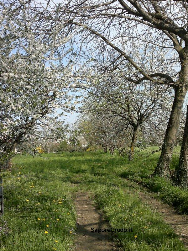 Nella Primavera